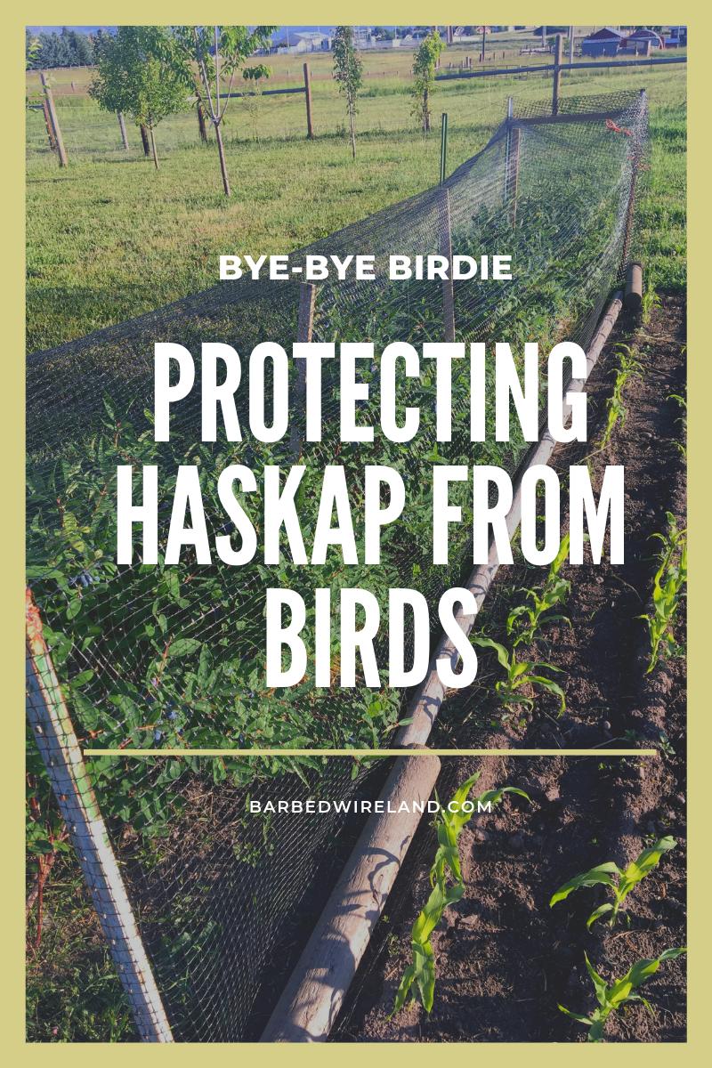 haskap bird netting